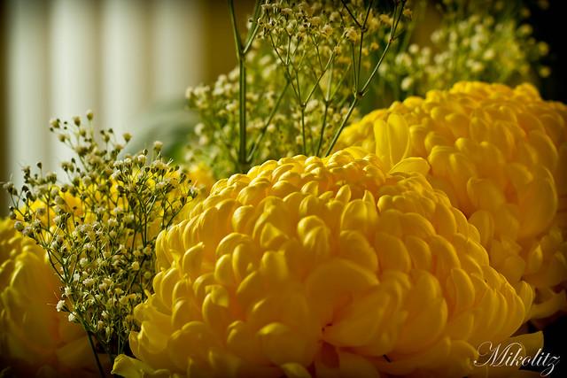 IMAGE: http://farm6.static.flickr.com/5018/5391839327_38bedb41ea_z.jpg