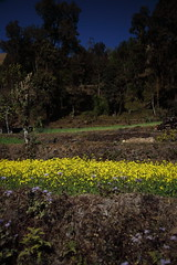 Sarangkot (Wakeling-James) Tags: nepal sarangkot