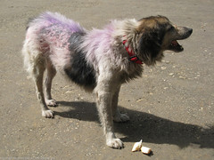 Собака-панк