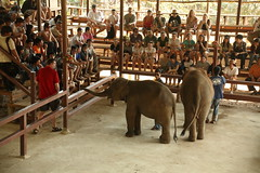 Elephant farm 9 Jan 15 (Harvey Pond) Tags: trip elephant farm bangkok c11 kanjanaburi
