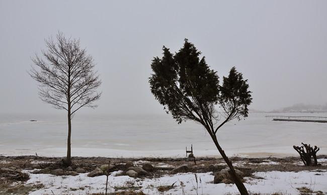 sne_en