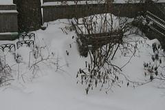 snow 081