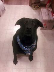 Wants a treat