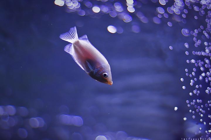 x fish2