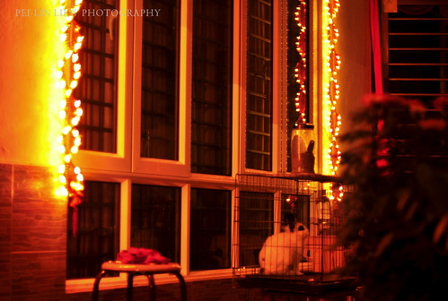 Lit Up for Chinese New Year, With a Rabbit by the Side, at My House