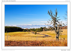 Paysages de Margeride (BerColly) Tags: winter france landscapes google flickr hiver paysages auvergne cantal margeride bercolly