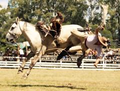 Barajo! (Eduardo Amorim) Tags: horses horse southamerica caballo uruguay cheval caballos cavalos pferde cavalli cavallo cavalo gauchos pferd pampa hest hevonen chevaux gaucho  amricadosul hst uruguai gacho  amriquedusud  gachos  sudamrica suramrica amricadelsur  sdamerika jineteada   americadelsud gineteada tacuaremb  americameridionale eduardoamorim fiestadelapatriagaucha departamentodetacuaremb pampauruguaio pampauruguaya