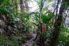 Roraima slope