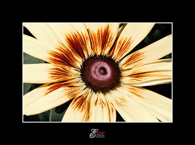 Flower - 002