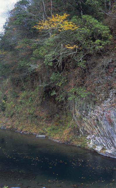 水辺と茂みのフリー写真素材