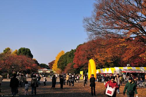 Ueno Park Autumn Autumn in Ueno Park