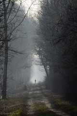 Walking into the fog (Vincenzo Giordano) Tags: trees parco man fog nikon stupinigi 70300 d7000 vincenzogiordano
