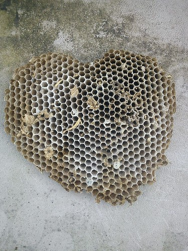 wasp nest heart