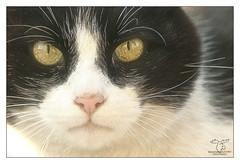 deep view (Outburner) Tags: portrait cat teddy nikond70 kitty carinthia katze pussycat villach nikkor2470afs