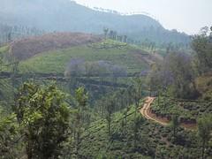 100_0088 (travellersai) Tags: kerala treehouse wayanad teaestate wildboar bandipur chital vythri banasuradam soojiparafalls streamvalleyresorts