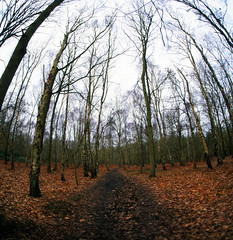 looming (Back, and to the left) Tags: winter 120 6x6 film analog mediumformat fuji yorkshire fisheye squareformat creativecommons wakefield russian newmillerdam velvia50 kiev88cm fullframefisheye arsat30mm hasselbladski flickr:user=backandtotheleft tumblr:user=thediaryofadisappointingman
