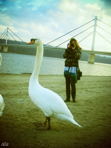 Swan and me