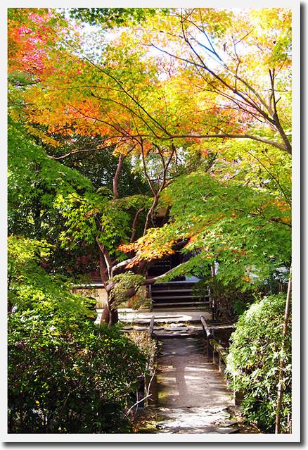 20101116_122424_新薬師寺_織田有楽斉の庭