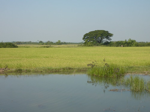 Hpa-An-Region-Campagne (7)