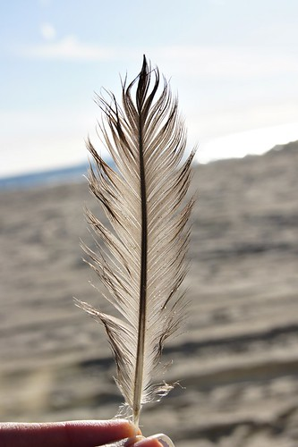 Beach: Feather