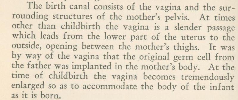 vagina vagina