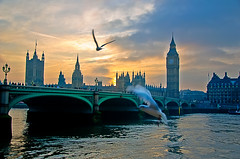 Gulls and Houses of Parliament at Sunset (briburt) Tags: bridge sunset england sky sun seagulls motion london tower clock water westminster birds thames river fly flying movement nikon dusk gulls flight housesofparliament bigben westminsterbridge d90 nikond90 briburt