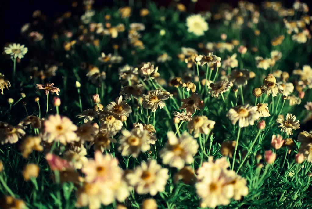 光影下的小花草