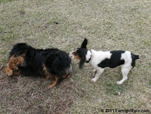 Best Buds Bert and Bear 5 - Farmgirl Fare