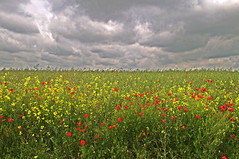 Poppy Field (teelawn) Tags: sky france green field clouds photoshop geotagged stormy poppies ww1 res cs4 thiepval thesomme nikond300 teelawn tinabarker