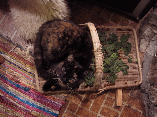 my nettles! all mine...
