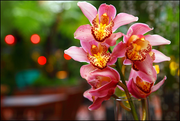 fresh-orchids