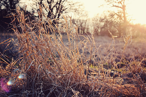 Winter on the Prairie