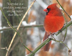Pic Quote of the Day (good day) (Tommer G) Tags: day cardinal quote good