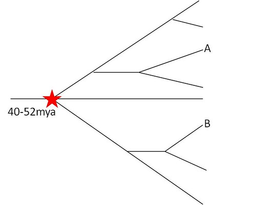 Simple tree example
