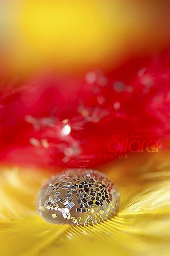 IMAGE: http://farm6.static.flickr.com/5018/5533430268_c841786bfc.jpg