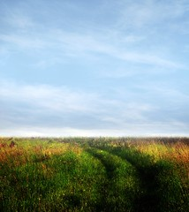 Premade BG 57 (~Brenda-Starr~) Tags: flowers sky nature field grass clouds photoshop background stock creativecommons resource cclicense premade brendastarr freeforuse backgroundsonly thestockyard