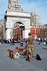 Dog Walker - Washington Square Park (Rachel Citron) Tags: newyorkcity spring arch manhattan washingtonsquarepark westie terrier gothamist curbed greenwichvillage dogwalker beautifulday odt nikond40x sixdogs soocthread thelocaleastvillage manhattanusersguide