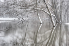 flooded woods in snowfall - EXPLORE (charlesgyoung) Tags: winter snow woods hdr d3 thatcher riverforest desplainesriver floodplain nikonfx