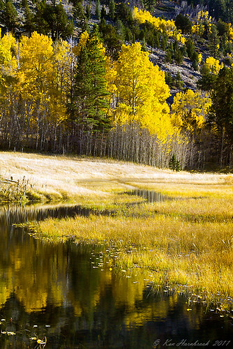 Meandering Creek Amongst the Aspens  F4KV3625