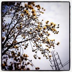 今年も 木蓮の 季節です。ね