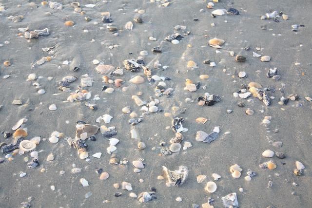 myrtle beach shells