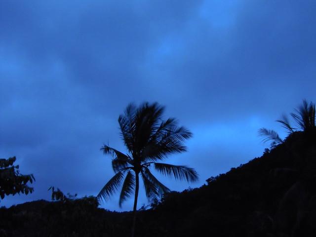 coconut palm in the rain