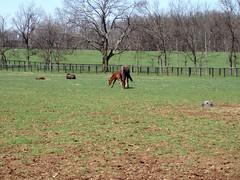 horse farm near Lexington, KY (by: Russ Glasson, creative commons license)