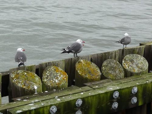 San Francisco January 2011