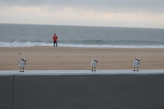 quiet morning (rimo4.1) Tags: seascape oceanscape beach seagulls lonely man