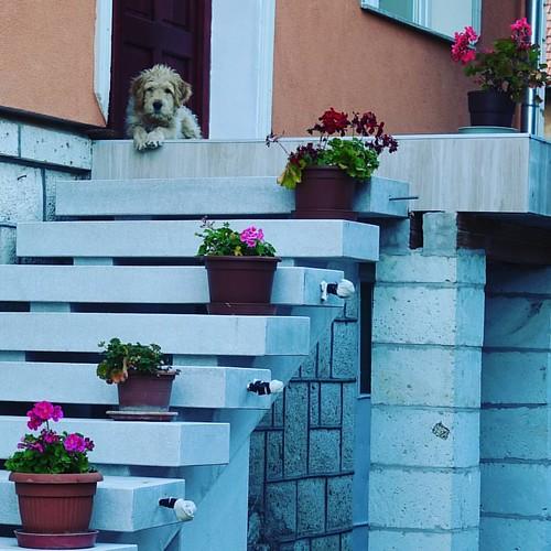 Легендарный Токай  Венгрия  Токай   #ЖизньКакБольшоеПутешествие  #венгрия  #токай