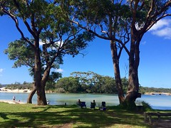 Shade (petes_travels) Tags: trees huskisson new south wales jervis bay australia