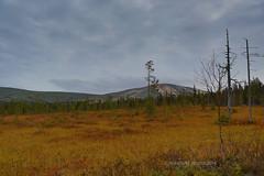Ylls tunturi, 716m height. Lapland. Finland. (Natalie-sun) Tags: ylls tunturi 716 m height suomi finland lapland lappi autumn syksy colour canoneos5dmarkiii