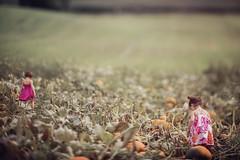 (Shannon Alexander Photography) Tags: fineartphotographer childphotography freelensing freelensed vermont fall autumn nature canon 135mmf2l pumpkins pumpkinpatch