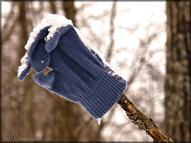 P1130729_glove_in_forest